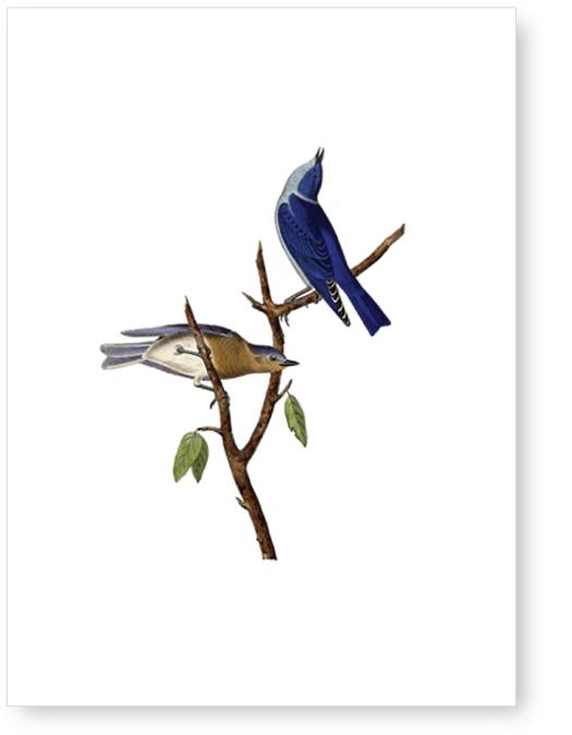 Karte Blue birds